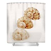 Marine Snails Shower Curtain by Joana Kruse