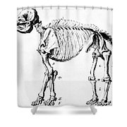 Mastodon Skeleton Drawing Shower Curtain by Science Source