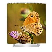 Meadow Brown Butterfly  Shower Curtain by Elena Elisseeva