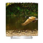 Midmorning Launch Shower Curtain by Susan Capuano