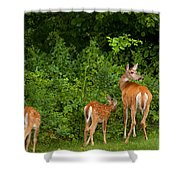 Mom And Two Shower Curtain by Karol  Livote