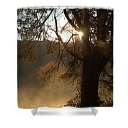 Morning Has Broken Shower Curtain by Karol Livote