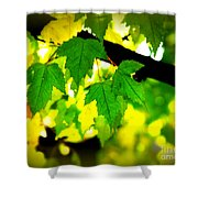 Morning  Light Shower Curtain by Perry Webster