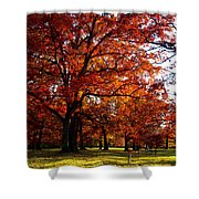 Morton Arboretum In Colorful Fall Shower Curtain by Paul Ge