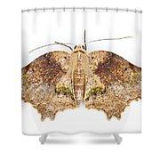 Moth Braulio Carrillo Np Costa Rica Shower Curtain by Piotr Naskrecki