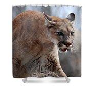 Mountain Lion Shower Curtain by Paul Ward