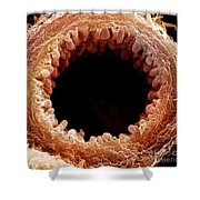 Mouse Bronchiole, Sem Shower Curtain by Science Source
