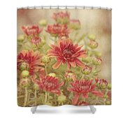 Mums The Word Shower Curtain by Kim Hojnacki