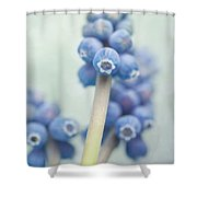 Muscari Shower Curtain by Priska Wettstein