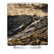 Mussels Sunset Shower Curtain by Henrik Lehnerer