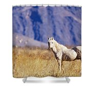Mustang Shower Curtain by Mark Newman and Photo Researchers