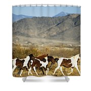 Mustangs Shower Curtain by Mark Newman and Photo Researchers