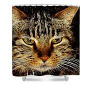 My Bored Cat Shower Curtain by Mariola Bitner