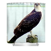 My Feathered Friend Shower Curtain by Karen Wiles