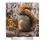 My Nut Shower Curtain by Robert Bales
