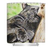 Nap Time Shower Curtain by Carol Blackhurst