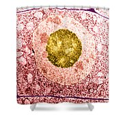Normal Cell Shower Curtain by Science Source