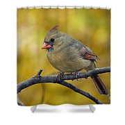 Northern Cardinal Female - D007849-1 Shower Curtain by Daniel Dempster