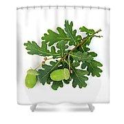 Oak Branch With Acorns Shower Curtain by Elena Elisseeva