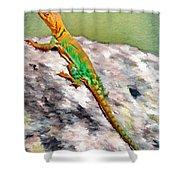 Oklahoma Collared Lizard Shower Curtain by Jeff Kolker