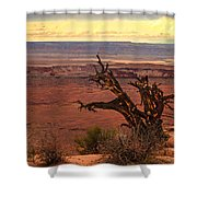 Old One Shower Curtain by Robert Bales