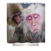 Older Snow Monkey Being Groomed By A Shower Curtain by Natural Selection Anita Weiner