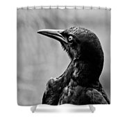 On Alert - Bw Shower Curtain by Christopher Holmes