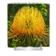Orange Protea Flower Art Shower Curtain by Rebecca Margraf