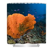 Orange Sponge With Crinoid Attached Shower Curtain by Steve Jones