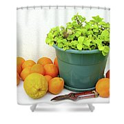 Oranges and Vase Shower Curtain by Carlos Caetano