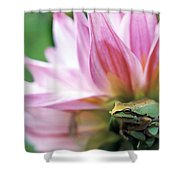 Pacific Tree Frog In A Dahlia Flower Shower Curtain by David Nunuk