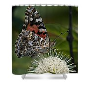 Painted Lady Butterfly Din049 Shower Curtain by Gerry Gantt