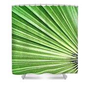 Palm Leaf Shower Curtain by Rudy Umans
