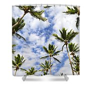 Palm Trees Shower Curtain by Elena Elisseeva