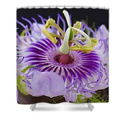 Passion Flora Shower Curtain by Juergen Roth