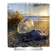 Pearl Of The Sea Shower Curtain by Debra and Dave Vanderlaan