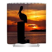PELICAN SUNDOWN Shower Curtain by KAREN WILES