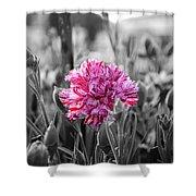 Pink Carnation Shower Curtain by Sumit Mehndiratta