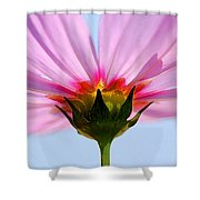 Pink Cosmos Shower Curtain by Rich Franco