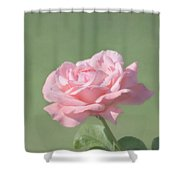 Pink Rose Shower Curtain by Kim Hojnacki