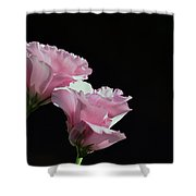 Pink Roses Shower Curtain by Lisa Plymell