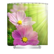 Pink Spring Shower Curtain by Carlos Caetano