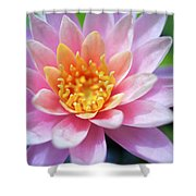 Pink Water Lily Shower Curtain by Kicka Witte
