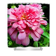 Pink Zinnia Shower Curtain by Sandi OReilly