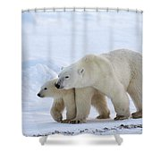 Polar Bear Ursus Maritimus And Cub Shower Curtain by Suzi Eszterhas