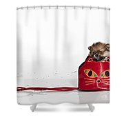 Pomeranian 2 Shower Curtain by Everet Regal