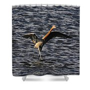 Prancing Heron Shower Curtain by David Lee Thompson