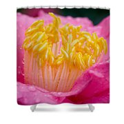 Pretty In Pink Shower Curtain by Rich Franco