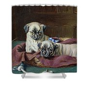 Pug Puppies In A Basket Shower Curtain by  Horatio Henry Couldery