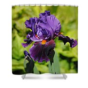Purple And Orange Iris Flower Shower Curtain by Jai Johnson